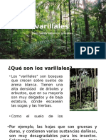 316012801 Varillales Expo