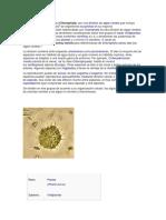 Los clorófitos o clorófitas