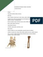 Ficha de Huesos y Partes