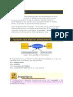 metamorficas df.docx