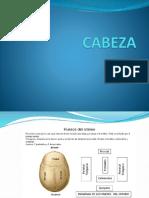 Cabeza 14