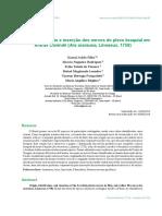 anatomia plexo braquial arara.pdf