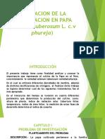 EVALUACION DE LA FERTILIZACION EN PAPA (solanum.pptx