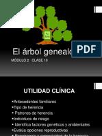 Anatomia Del Sistema Urinario