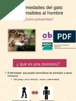 enfermedadesfelinastransmisibles-pdf-121214125347-phpapp01.pdf