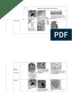 Cytology Micrographs