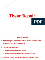 5- Tissue Healing and Repair PPT