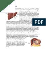 Anatomia y Cancer de Higado
