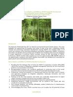 Bamboo Vision