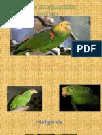 presentacion pericos.pptx