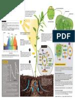 Fotosíntesis.pdf