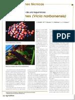 Los alberjones (Vicia narbonensis)