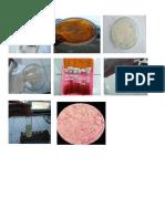 Doku Bakteri 1