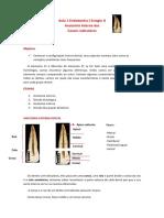 Aula 1 Endodontia