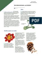 Guia  Las Plantas Tercero Basico