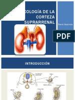 Farmacología de la corteza suprarrenal