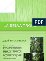 laselvatropical-120413091503-phpapp02