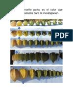 post cosecha TESIS (1).pdf