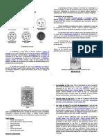 Guía de Desarrollo Embrionario