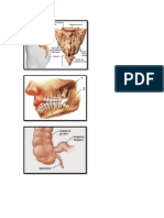 Organos Vestigiales