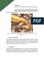 10.2. Filum Hemicordata FLOR.docx
