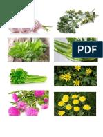 Album de Planta Medicinales