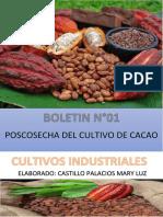 Boletin Cacao