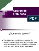 Operon ARA