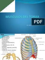 4 Clase MIOLOGIA Musculos Del Torax