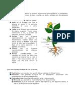 Tema 3 Las Plantas
