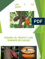 El Cacao 7-11-17 Ok
