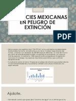 10 Especies Mexicanas en Peligro de Extinción