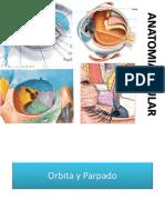 Anatomia Ocular