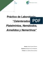 Informe Zoo Platermintos, Nematodos, Cnidarios y Annelidos