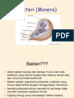 Bakteri Monera