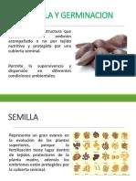Semilla y Germinacion