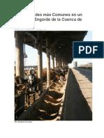 Enfermedades Más Comunes en Un Centro de Engorde de La Cuenca de Lima