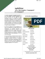 Arvicola amphibius