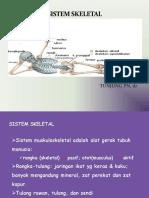Sistem Skeletal