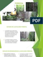 Ecología Forestal 1
