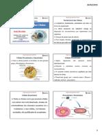 Organização Geral das Células, Célula Vegetal e