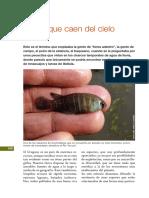 almanaqueBSE_peces