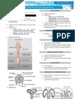 Neuroanatomy Ventricular System and CSF