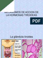 Mecanismos de Accion de La Hormona Tiroidea