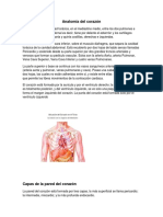 Apunte 2 .Anatomia Coronaria