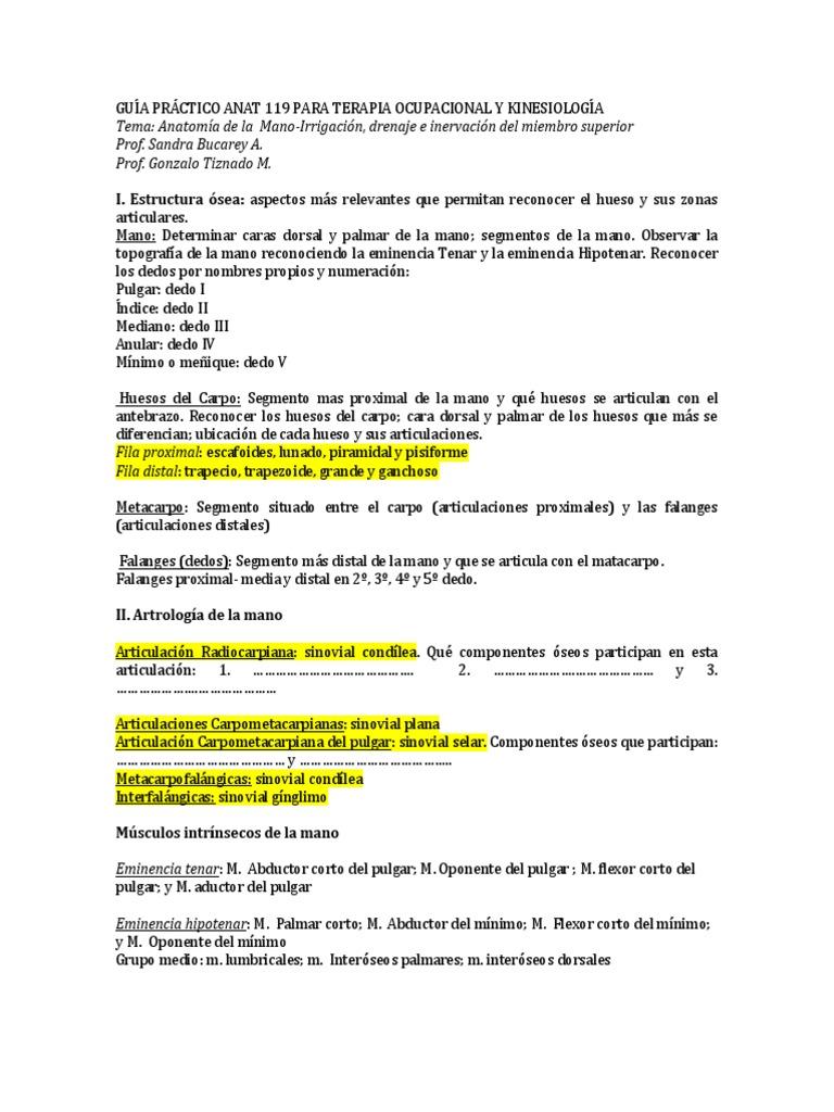 Vistoso Articulaciones Pulgar Anatomía Ilustración - Anatomía de Las ...