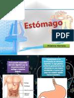 estomago-120621230310-phpapp01