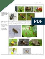 Insect Arium