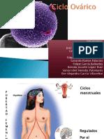 Cicloovrico Embriologa