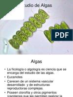 Estudio de Algas